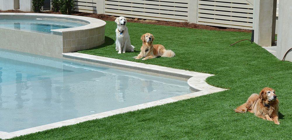 dogs love pet turf