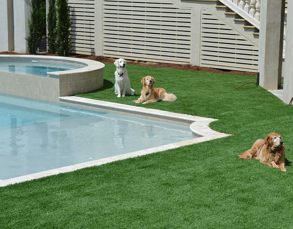 dogs love pet turf