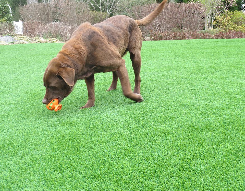 dog turf with no foul odor mississauga