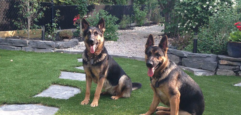 artificial grass for dogs toronto