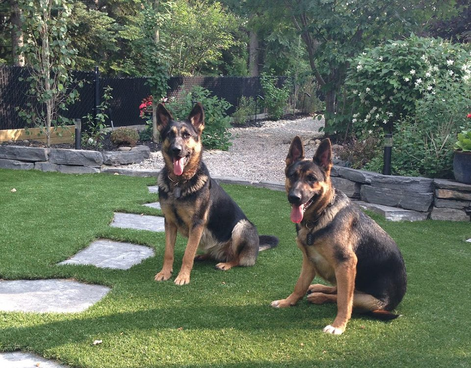 artificial grass for dogs toronto