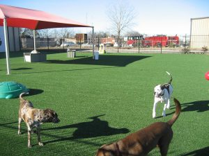 dogs-on-artificial-turf-park