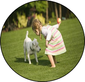 Child and dog-friendly artificial turf for Toronto