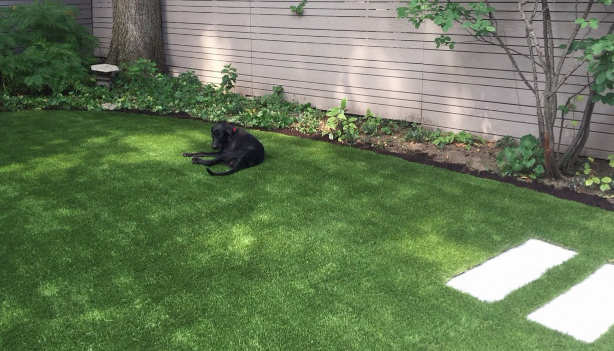 Let me be Im enjoying the K9-70 Champion DF artificial grass
