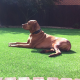 The best artificial dog turf highly durable, soft and clean