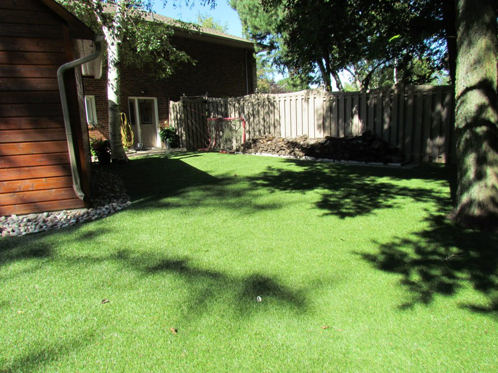 Shaded backyard is hard to grow real grass