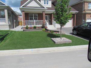 Be the envy of the neighborhood always green
