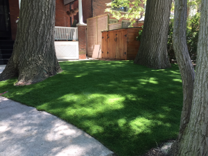Trees galore, vigorously rake the grass