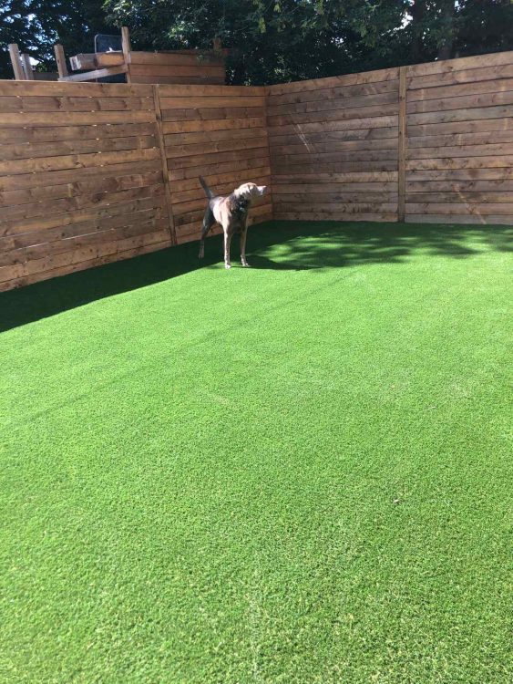betty-the-dog-loves-her-turf