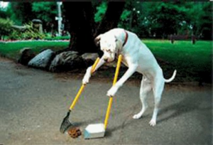 dog cleaning poo