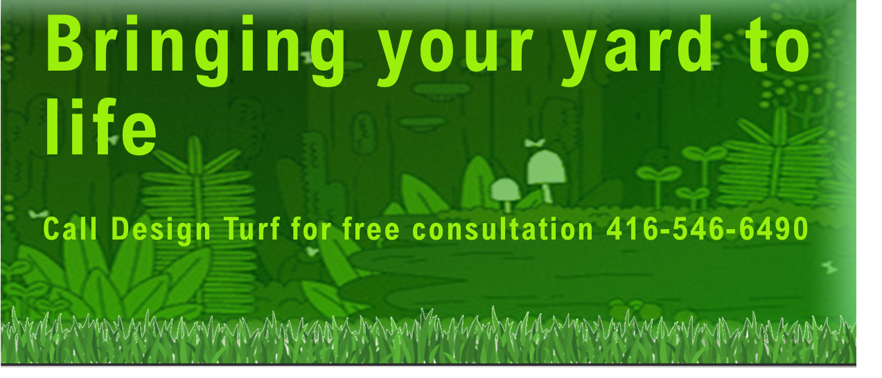 bringing your yard to life